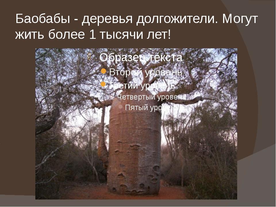 Баобабы - деревья долгожители. Могут жить более 1 тысячи лет!