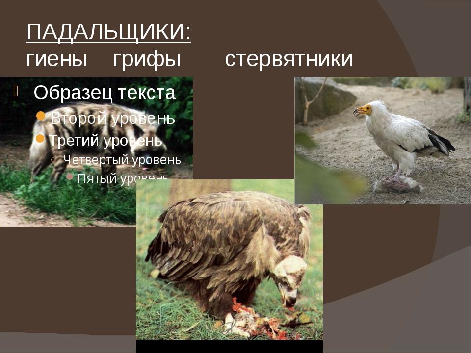 ПАДАЛЬЩИКИ: гиеныгрифы стервятники