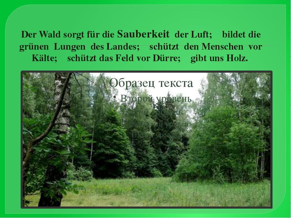 Der Wald sorgt für die Sauberkeit der Luft; bildet die grünen Lungen des Land...