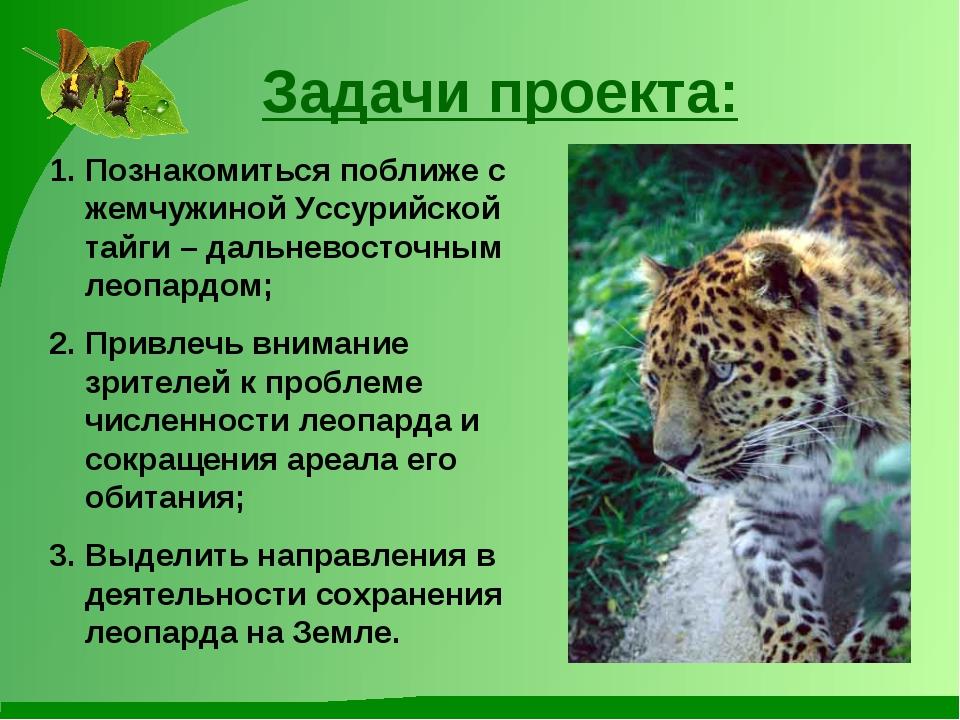 Задачи проекта: Познакомиться поближе с жемчужиной Уссурийской тайги – дальне...
