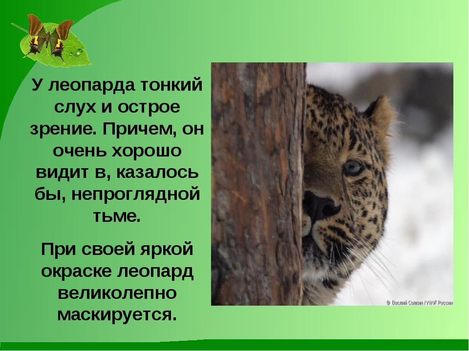 У леопарда тонкий слух и острое зрение. Причем, он очень хорошо видит в, каза...