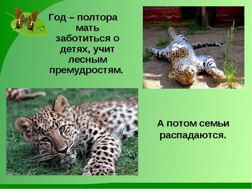 Год – полтора мать заботиться о детях, учит лесным премудростям. А потом семь...