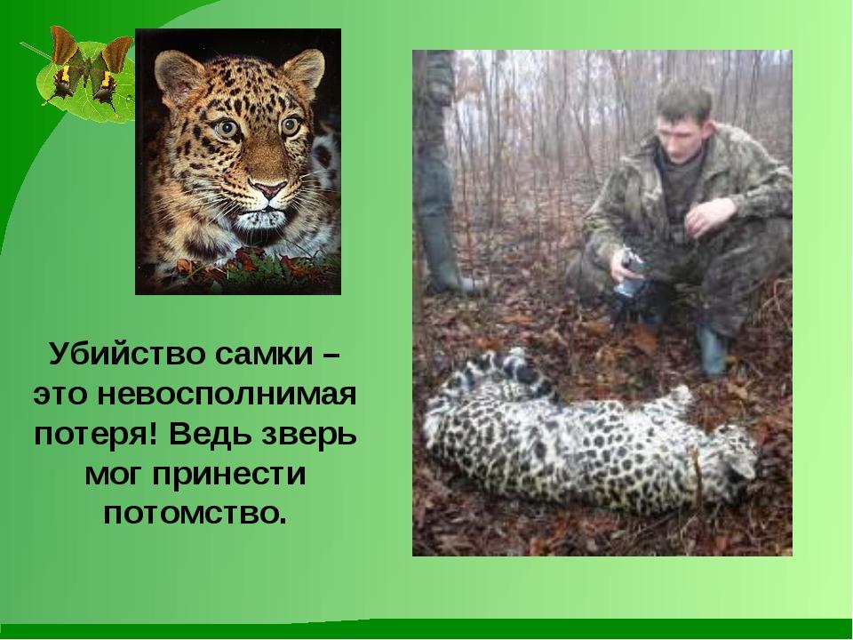 Убийство самки – это невосполнимая потеря! Ведь зверь мог принести потомство.