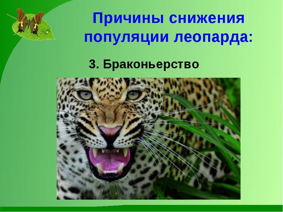 Причины снижения популяции леопарда: 3. Браконьерство