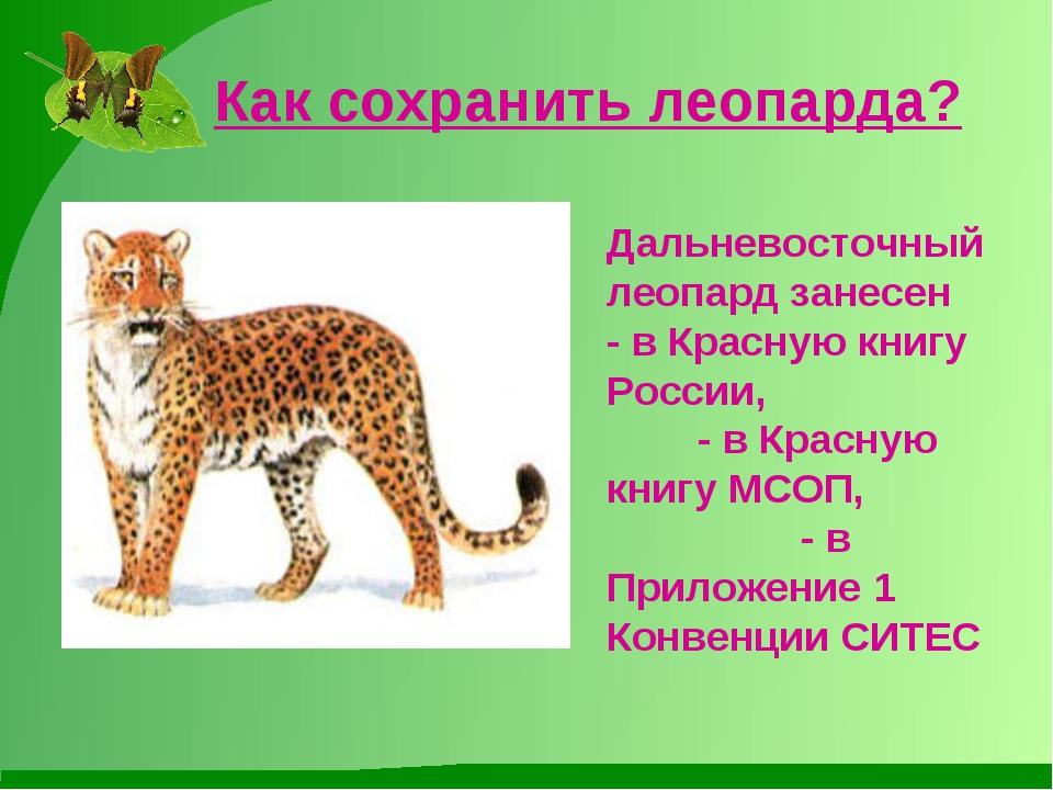 Как сохранить леопарда? Дальневосточный леопард занесен - в Красную книгу Рос...