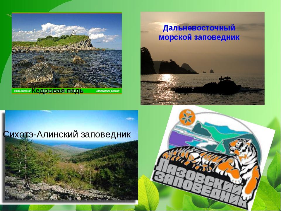 Сихотэ-Алинский заповедник Кедровая падь Дальневосточный морской заповедник