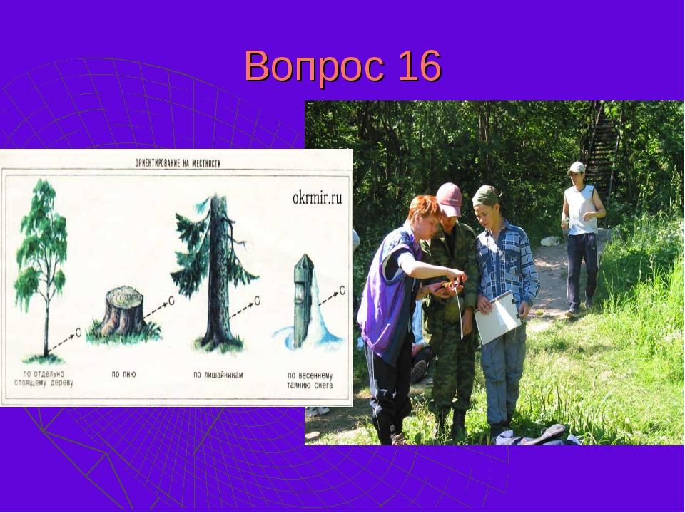 Вопрос 16 Как ориентиро-ваться в лесу, если нет компаса? Назовите хотя бы два...