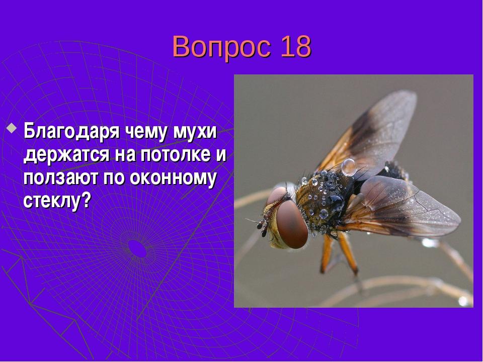 Вопрос 18 Благодаря чему мухи держатся на потолке и ползают по оконному стекл...