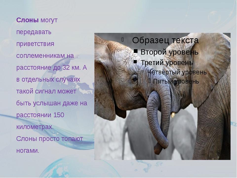 Слонымогут передавать приветствия соплеменникам на расстояние до 32 км. А в...