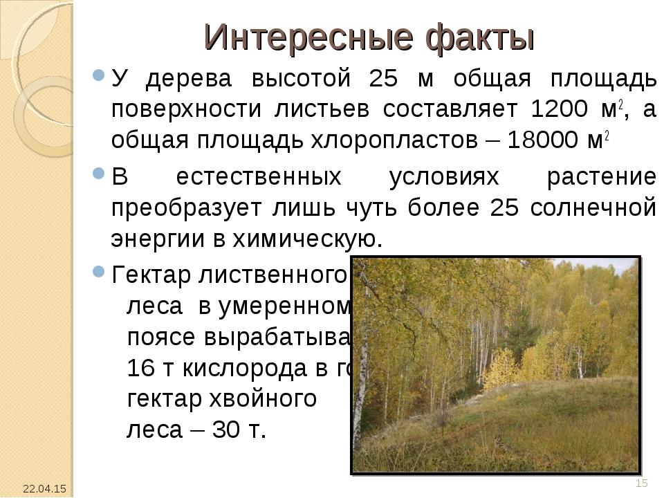 Интересные факты У дерева высотой 25 м общая площадь поверхности листьев сост...