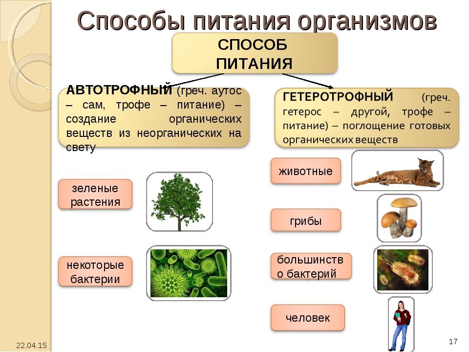 Способы питания организмов * *