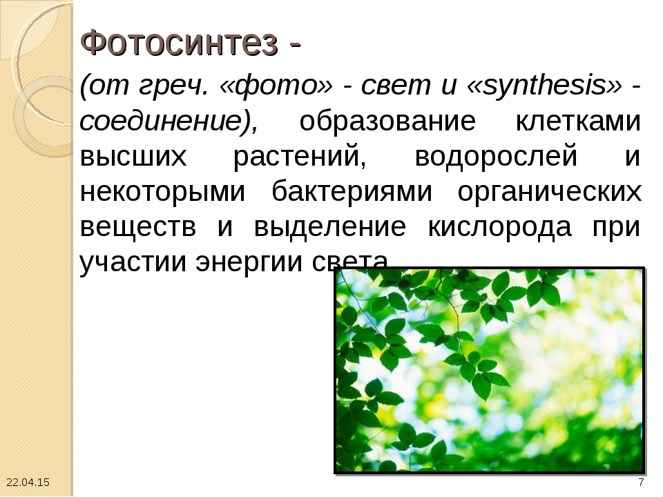 Фотосинтез - (от греч. «фото» - свет и «synthesis» - соединение), образовани...