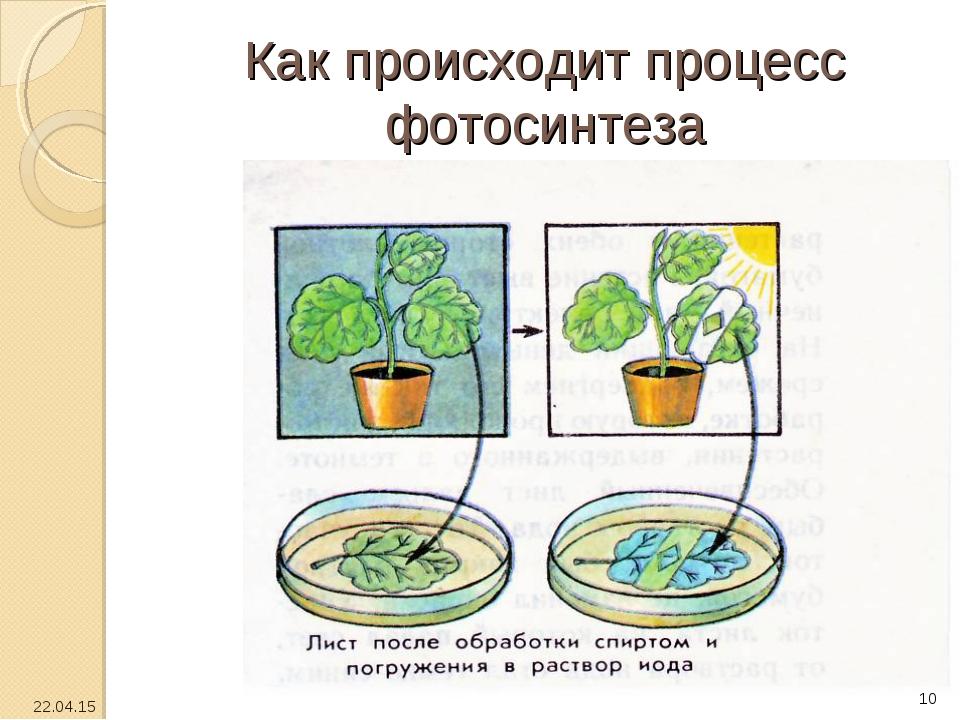 Как происходит процесс фотосинтеза * *
