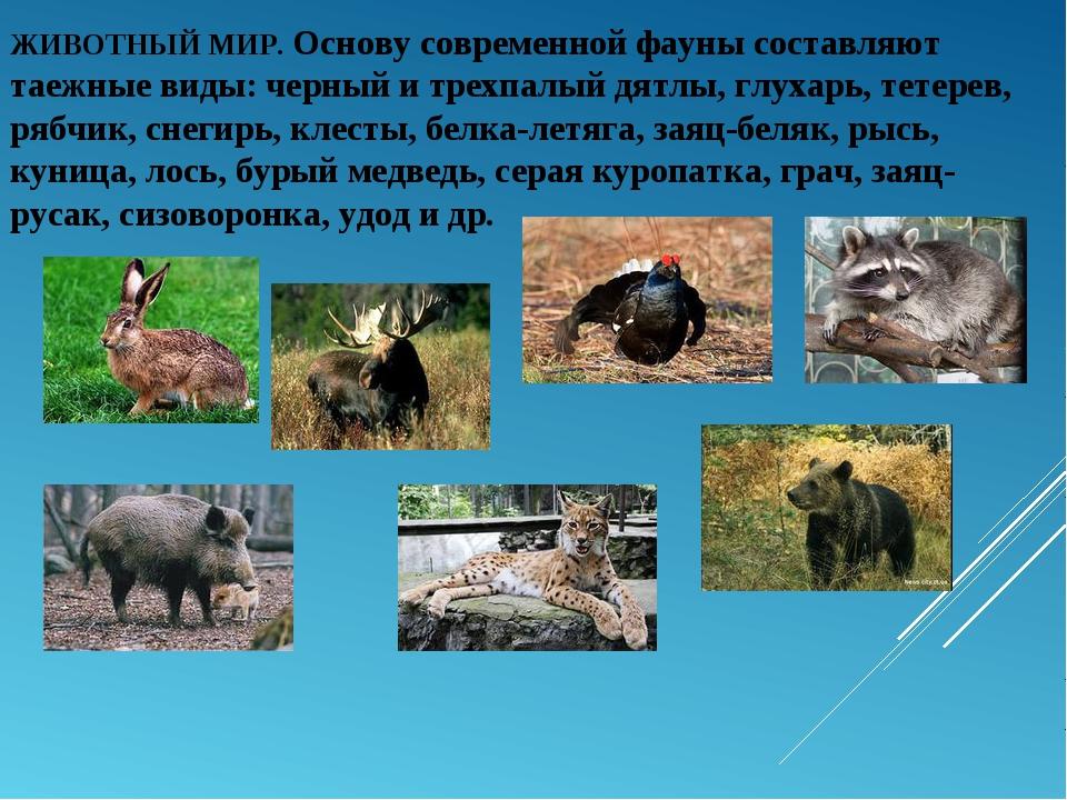 ЖИВОТНЫЙ МИР. Основу современной фауны составляют таежные виды: черный и трех...