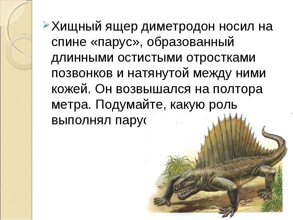 Хищный ящер диметродон носил на спине «парус», образованный длинными остистым...