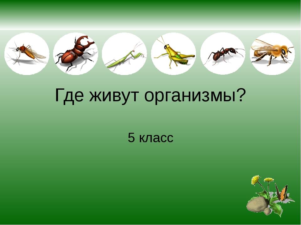 Где живут организмы? 5 класс