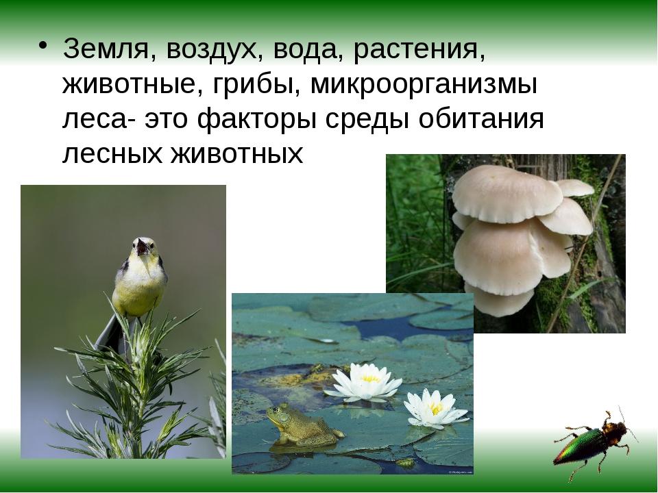 Земля, воздух, вода, растения, животные, грибы, микроорганизмы леса- это факт...
