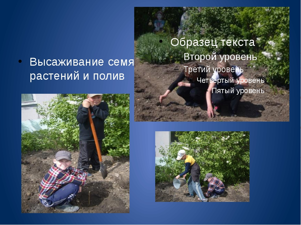 Высаживание семян растений и полив