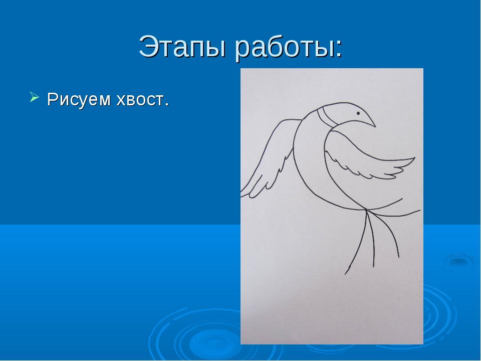 Этапы работы: Рисуем хвост.