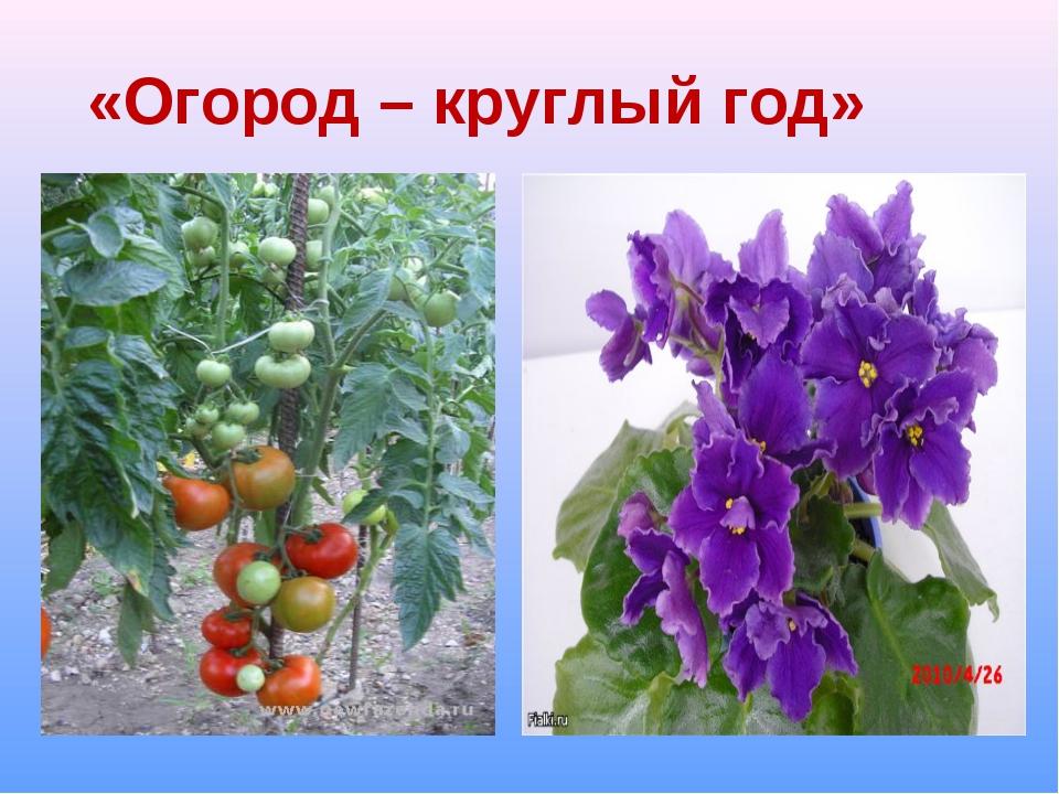 «Огород – круглый год»