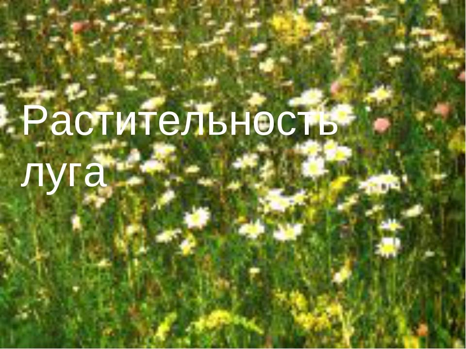 Растительность луга