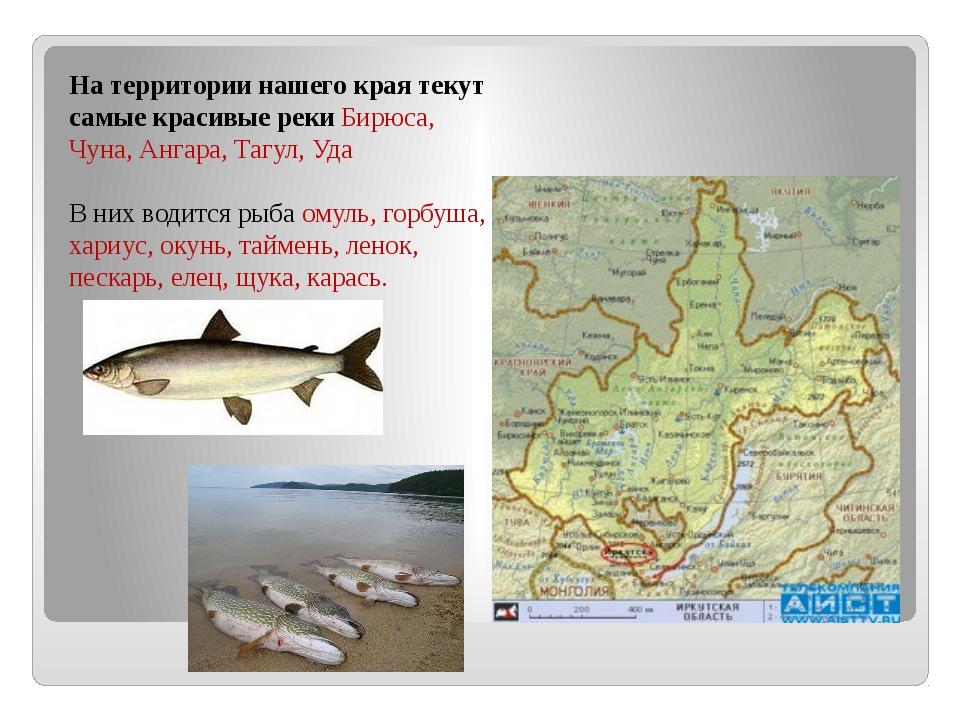 На территории нашего края текут самые красивые реки Бирюса, Чуна, Ангара, Таг...