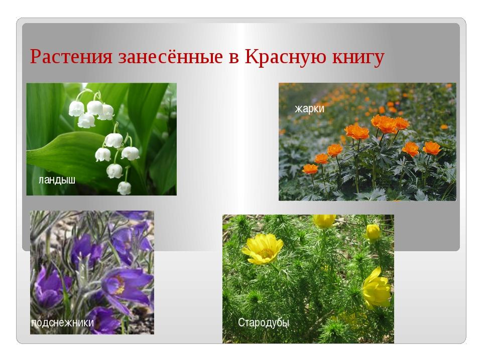 Растения занесённые в Красную книгу ландыш подснежники жарки Стародубы