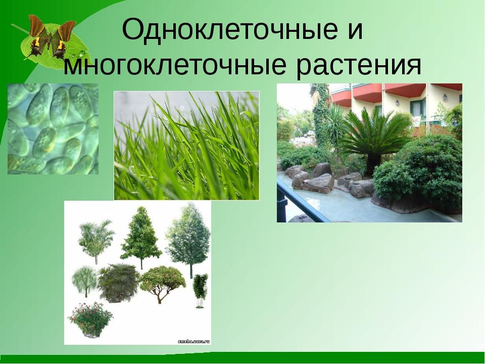 Одноклеточные и многоклеточные растения