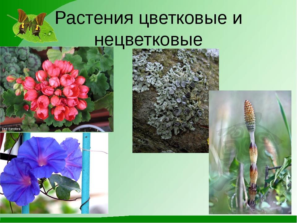Растения цветковые и нецветковые