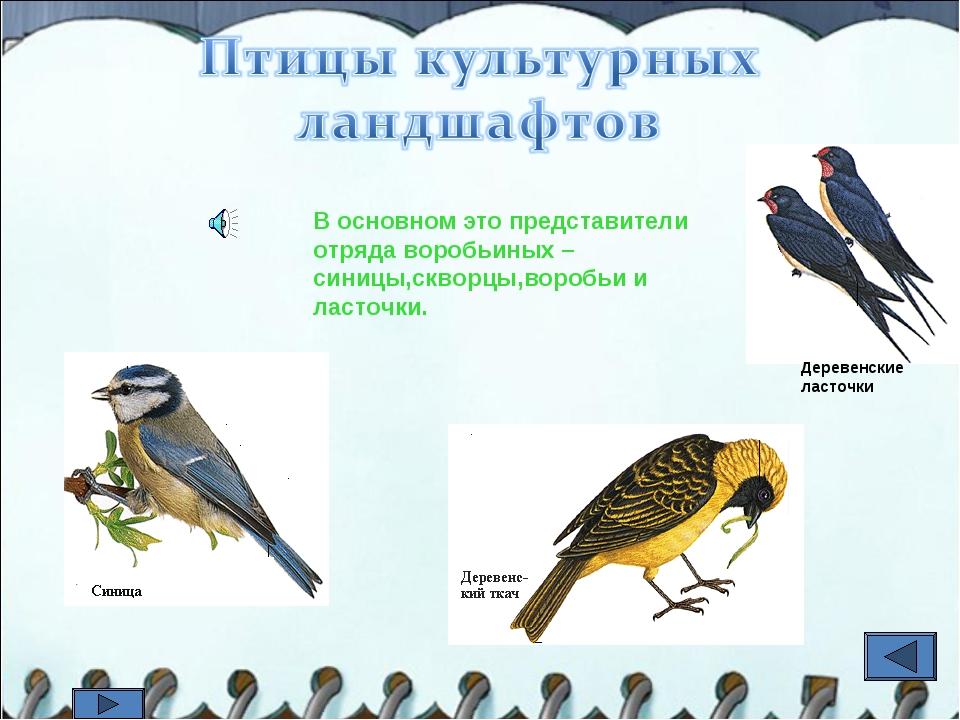 В основном это представители отряда воробьиных – синицы,скворцы,воробьи и лас...