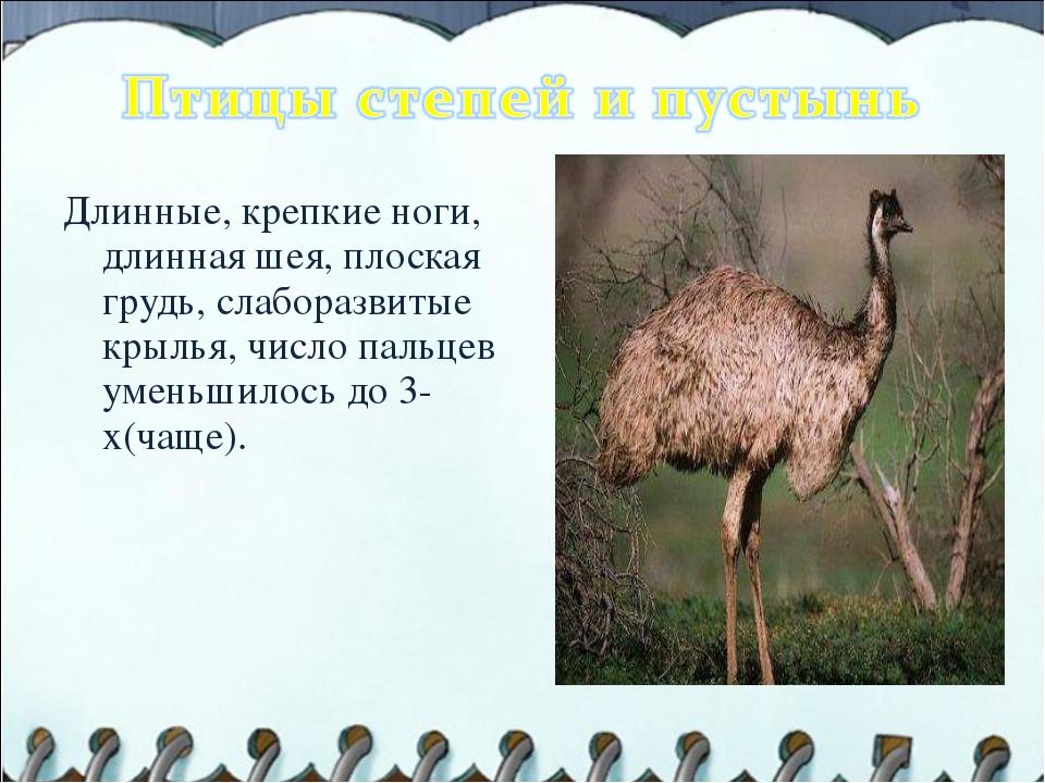 Длинные, крепкие ноги, длинная шея, плоская грудь, слаборазвитые крылья, числ...