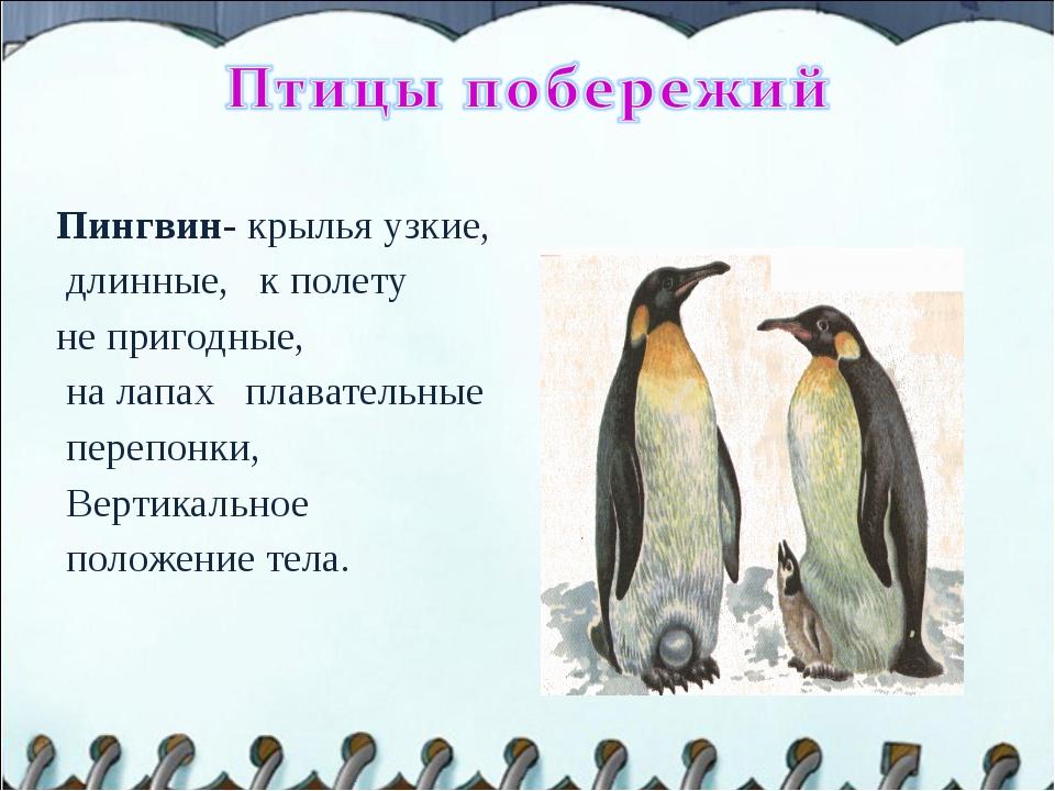 Пингвин- крылья узкие, длинные, к полету не пригодные, на лапах плавательные...