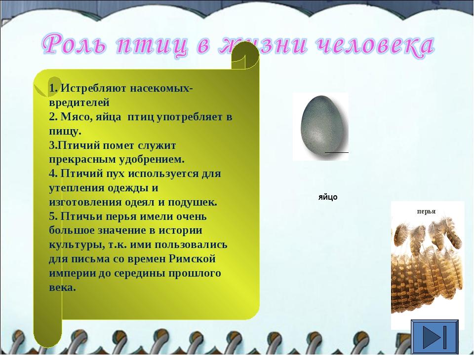 яйцо 1. Истребляют насекомых-вредителей 2. Мясо, яйца птиц употребляет в пищу...