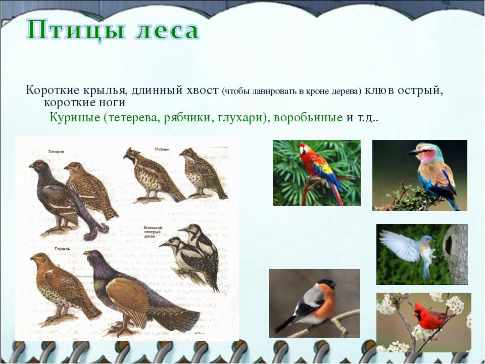 Короткие крылья, длинный хвост (чтобы лавировать в кроне дерева) клюв острый...