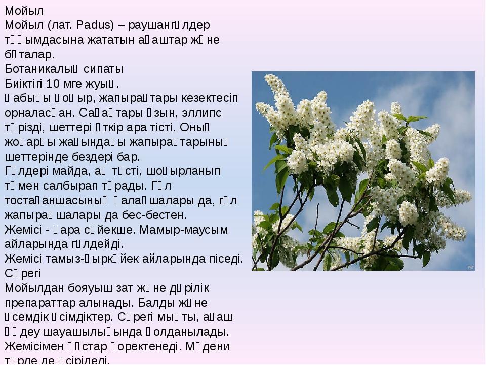 Мойыл Мойыл (лат. Padus) – раушангүлдер тұқымдасына жататын ағаштар және бұта...