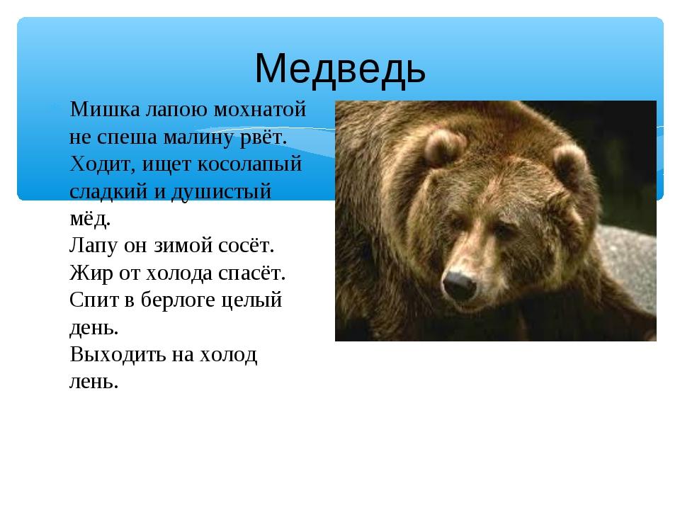 Медведь Мишка лапою мохнатой не спеша малину рвёт. Ходит, ищет косолапый слад...