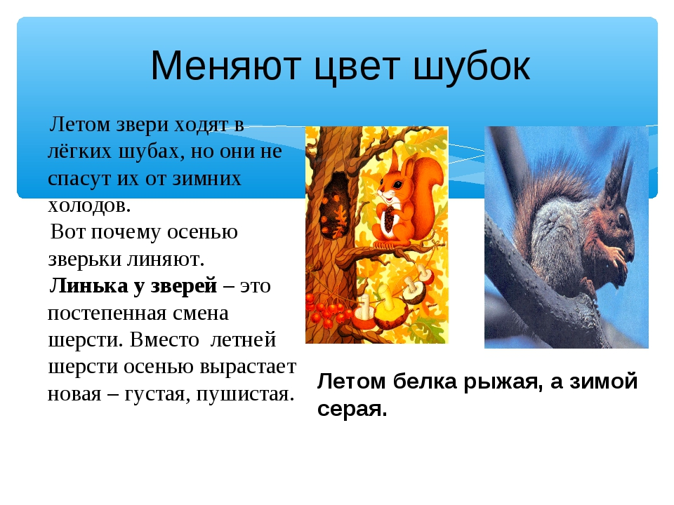 Летом звери ходят в лёгких шубах, но они не спасут их от зимних холодов. Вот...
