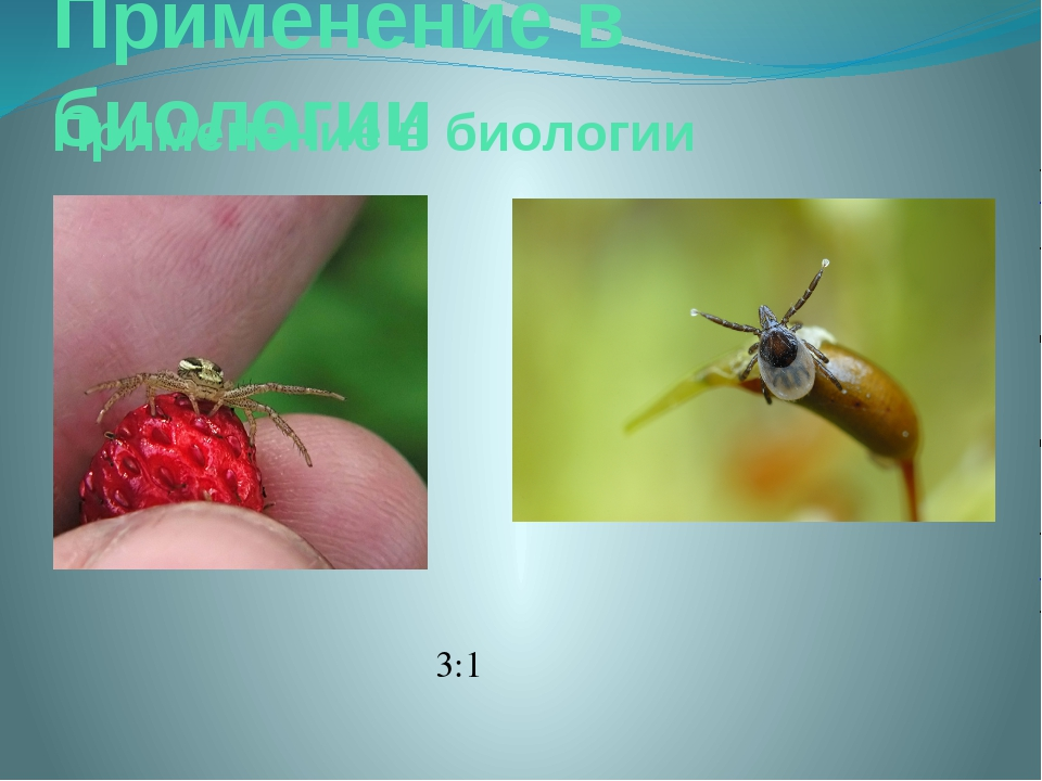 Применение в биологии Применение в биологии 3:1
