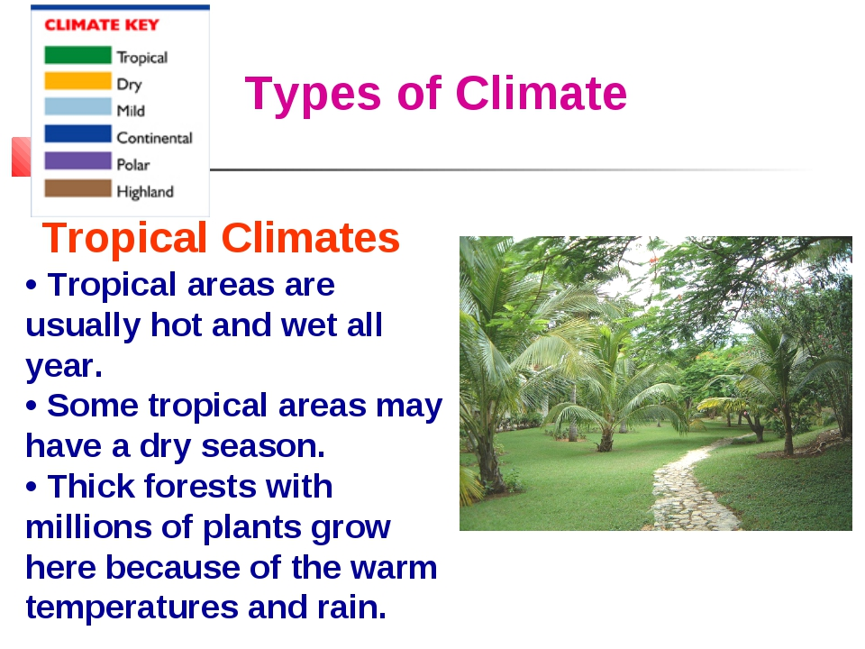 Types of Climate Tropical Climates • Tropical areas are usually hot and wet a...