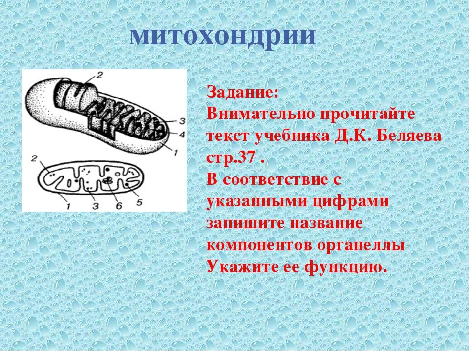 митохондрии Задание: Внимательно прочитайте текст учебника Д.К. Беляева стр.3...