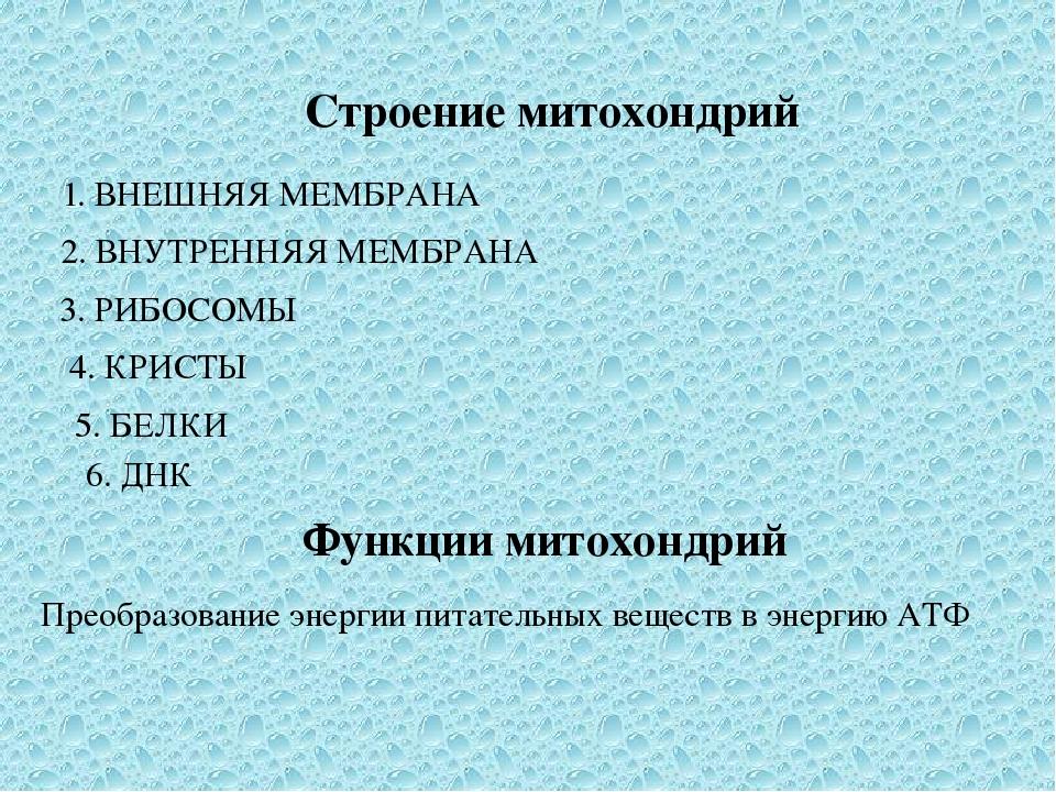 Строение митохондрий 1. ВНЕШНЯЯ МЕМБРАНА 2. ВНУТРЕННЯЯ МЕМБРАНА 3. РИБОСОМЫ 4...