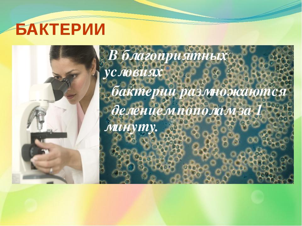 БАКТЕРИИ В благоприятных условиях бактерии размножаются делением пополам за 1...