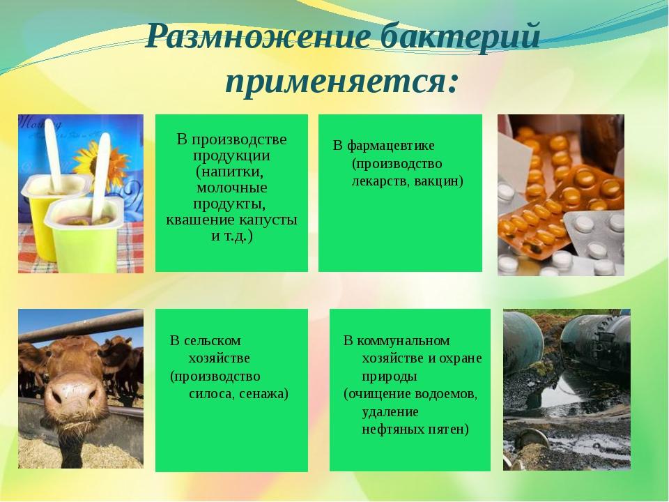 Размножение бактерий применяется: В производстве продукции (напитки, молочные...
