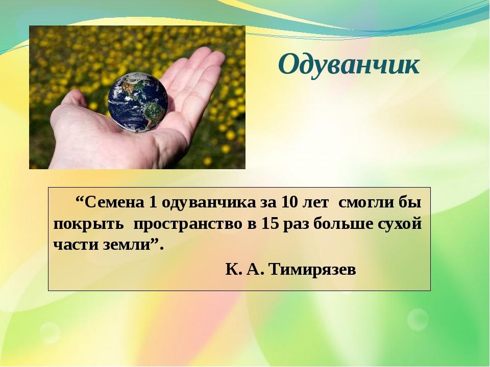 """""""Семена 1 одуванчика за 10 лет смогли бы покрыть пространство в 15 раз больш..."""