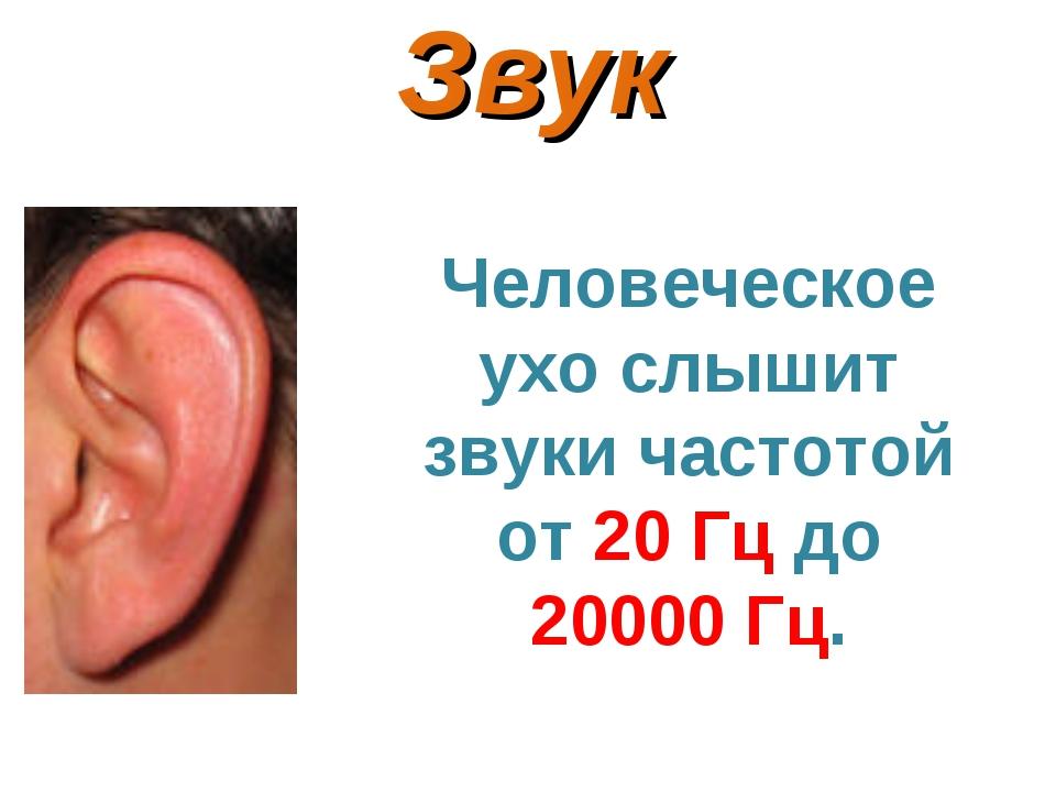 Звук Человеческое ухо слышит звуки частотой от 20 Гц до 20000 Гц.
