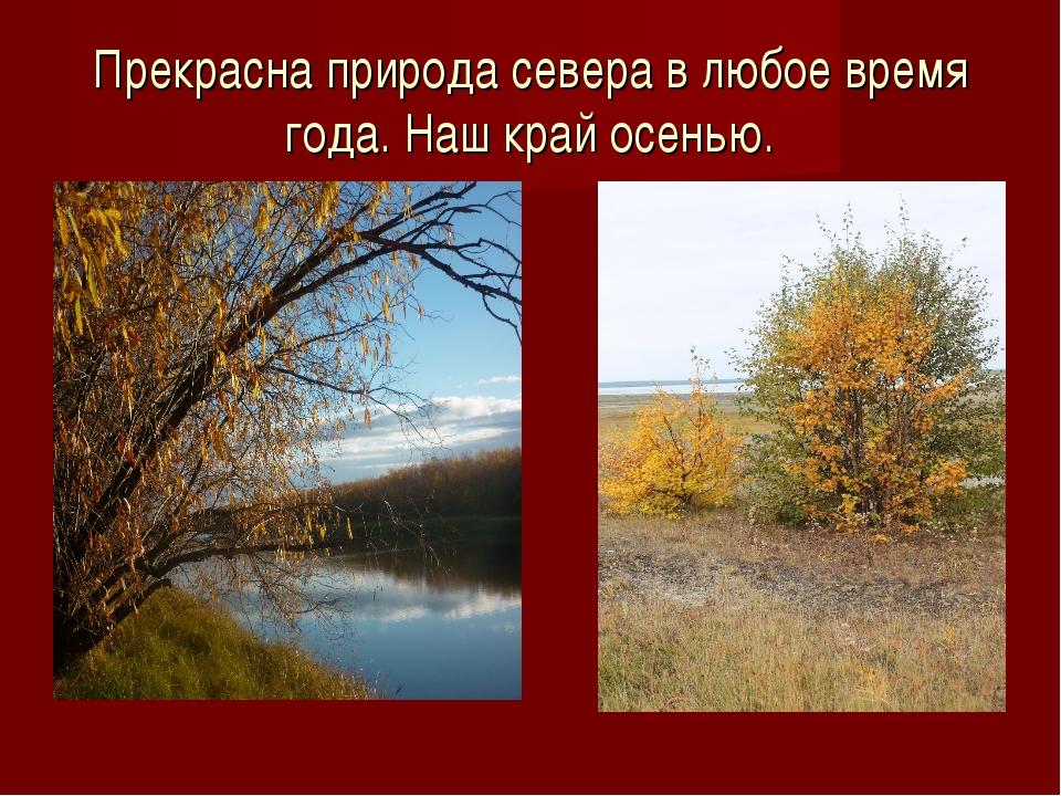 Прекрасна природа севера в любое время года. Наш край осенью.
