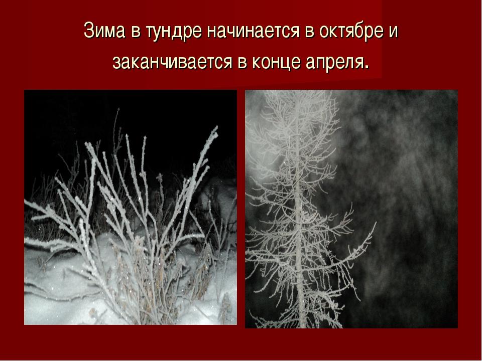 Зима в тундре начинается в октябре и заканчивается в конце апреля.