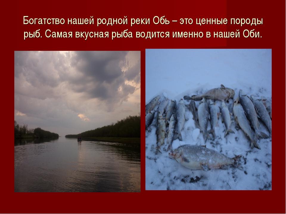 Богатство нашей родной реки Обь – это ценные породы рыб. Самая вкусная рыба в...
