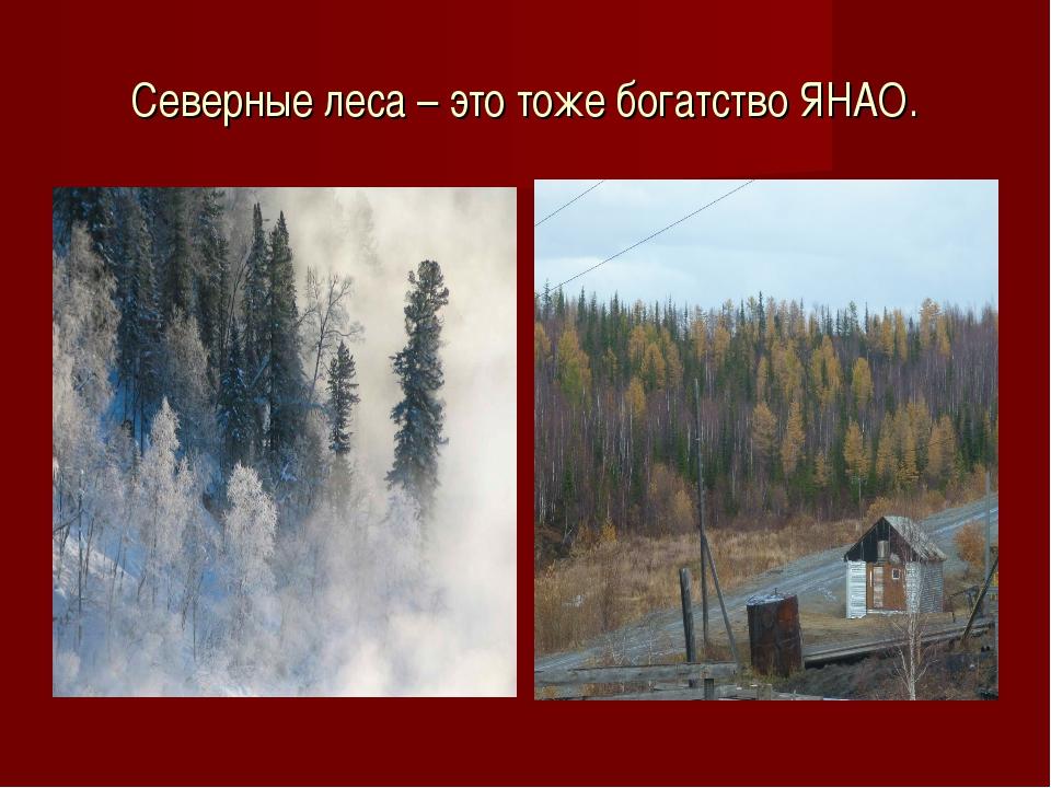 Северные леса – это тоже богатство ЯНАО.