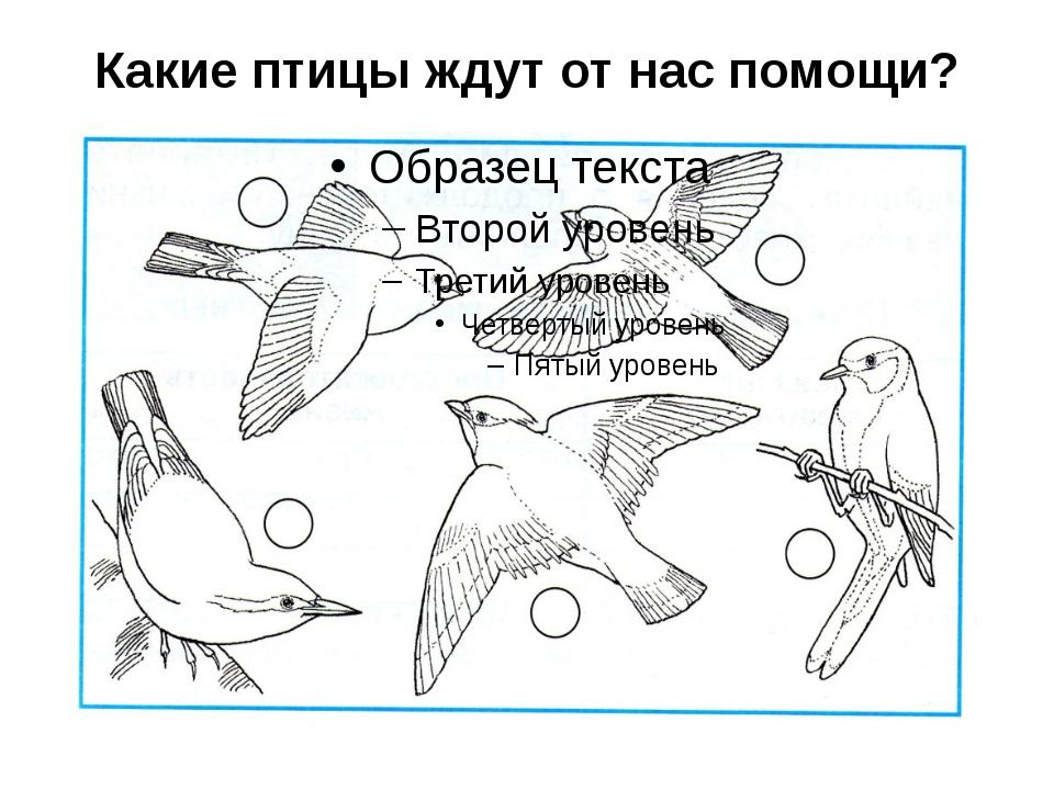 Какие птицы ждут от нас помощи?